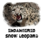 Snow Leopard Photo Shirt Growling-5307