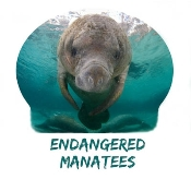 Manatee Photo Shirt-3688