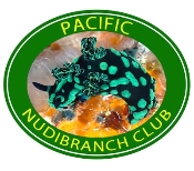 Nudibranch Photo Shirt -6753