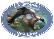 Sea Lion Photo Shirt-4906