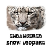 Snow Leopard Photo Shirt Portrait-5315